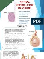 Sistema Reproductor Masculino (1)ORIGINAL