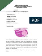 Practica 16 D1 - 2019 Histologia Del Sistema Endocrino (1)