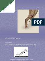 FUERZA2017.pdf