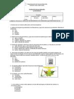Prueba-Fotosintesis-6basico.docx
