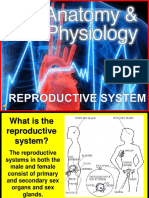 178-Anatomy-Reproductive-System (1).ppt