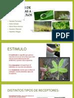 Repuestas de Las Plantas a Los Estimulos