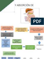 Digestión de proteínas y vitaminas