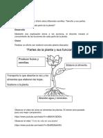 actividades plantas