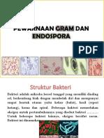 Pewarnaan Gram Dan Endospora