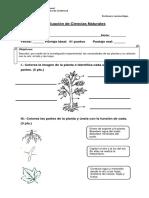 Evaluación las plantas