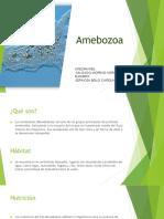 Presentación de Amebozoa (Protozoos)
