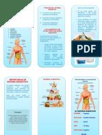 TRIPTICO   sistema digestivo.docx