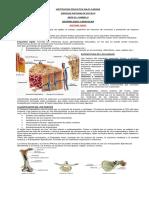 6. Guia Septimo Sistema Oseo y Muscular