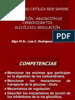 Digestion y Absorción Glucolisis Fermentación Carbohidratos (1)6