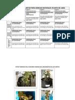 EXPERIMENTO DE PLANTAS PARA CIENCIAS NATURALES.docx