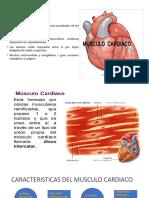 histologia 1234.pptx