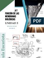 UNIDAD 3 ESTRUCTURA Y FUNCIÓN DE LAS MEMBRANAS BIOLÓGICAS