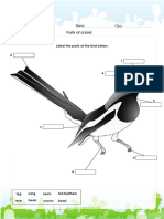 Label Parts of a Bird