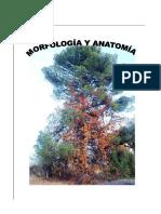 1-Morfología de la vid.pdf