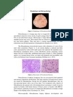 Morphology, Histopathology and Clinical Manifestation of FAM (1).docx