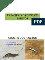 Principais Ordens Dos Insetos