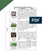 Plagas Cultivos Orinoquia (Yuca, maiz, sorgo y soya)