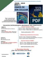 Seminario I Señalizacion Celular