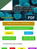 324591217 Respuestas Celulares Al Estres y Las Agresiones Toxicas