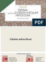 histologia célula sistema linfocardiovascular