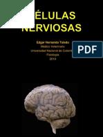 1.2 Neurona
