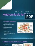 Anatomia de La Orbita 2018