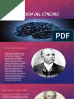Fisiologia Del Cerebro
