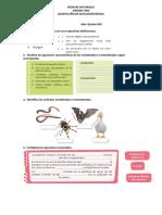 EVALUACIONES 5TO CCNN.docx