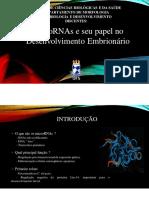 MicroRNAs e seu papel no desenvolvimento embrionário