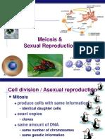 Meiosis-AP-Biology.ppt