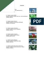 359603014-Nombres-Cientificos-Plantas-El-Salvador.docx