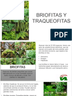 Briofitas y Traqueofitas