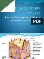 1 - Integumentary System