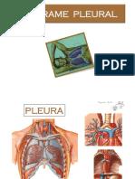 06 Derrame Pleural