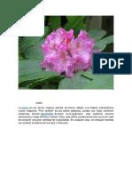 plantas toxicas.docx