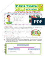 Las Funciones de La Planta Para Tercero de Primaria
