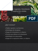 Tejidos Vegetales, Fotosíntesis y Respiración Celular