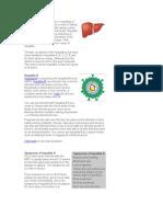 Hepatitis B Overview