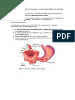 Patogenia de La Infección Por Helicobater Pylori en El Desarrolllo de La Ulcera Peptica