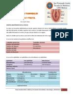 5. Patologías tumorales de vagina y vulva (Diana Marín)