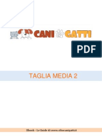 Taglia Media 2