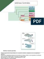 Eudicotiledóneas Centrales.pptx