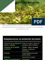 0001b Briofitas Prevasculares Vasculares