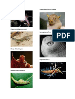 Animales raros 2.docx