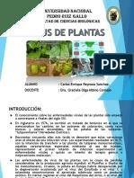 14. Virus de Plantas Exposición