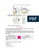 Nomenclatura das superfícies dentais.docx