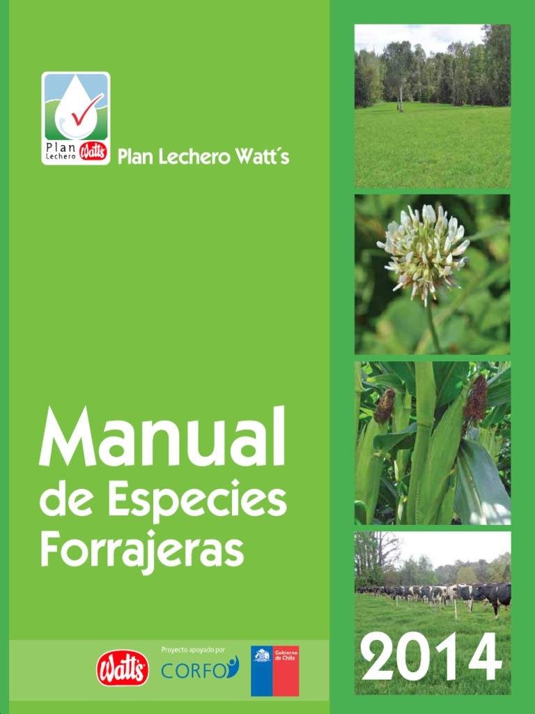 Bio Semillas Alfalfa Hierba 10kg Eco Perenne Producción de Forraje de Campo