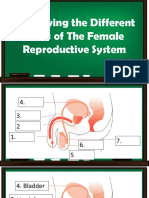 Parts of the Reproductive System