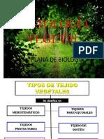 Histologiavegetal 150619022010 Lva1 App6892